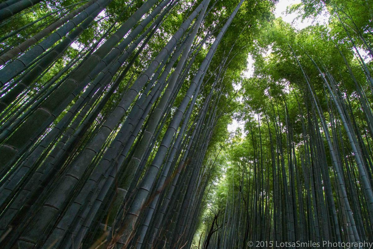 A Taste of Japan: Arashiyama Bamboo Grove
