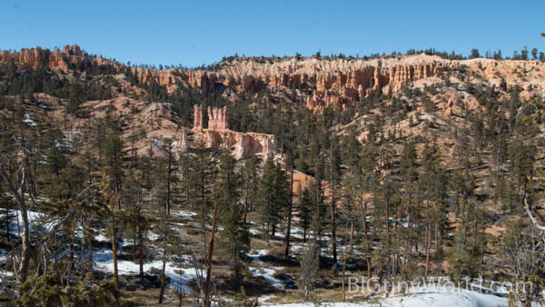 Trees with a backdrop of hoodoos off of the Fairyland Loop Trail | bigtinyworld.com