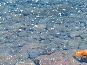 Close-up of the crystal-clear water of Crater Lake | BIGtinyWorld Travel