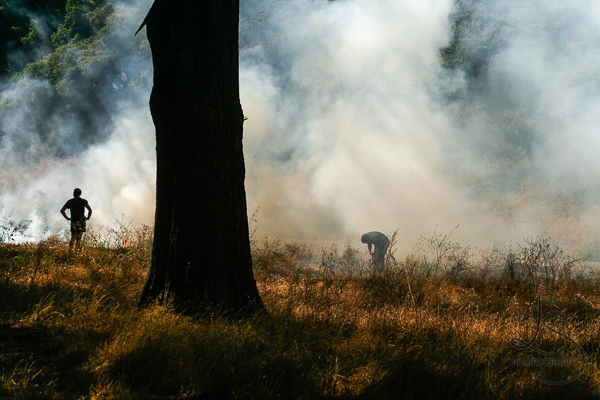 Fire in Golden Gate Park