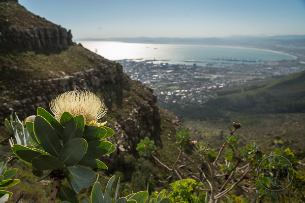 table-mountain-3