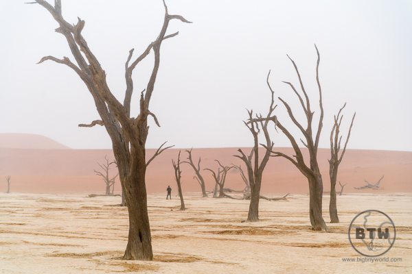 Deadvlei in the fog