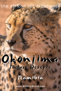 Okonjima Nature Reserve - The African Cat Experience | BIG tiny World Travel | We didn't see cats in Etosha, so we took matters into our own hands by visiting the Okonjima Nature Reserve. Read all about our experience and check out the best place to find cats in Namibia! | #travel #africatravel #okonjima #bigcats #wildlifephotography #shadeadventures
