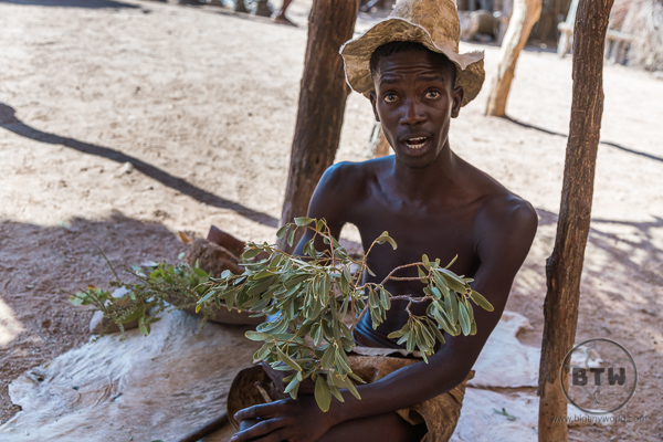 Damara man showing herbs used for medicine