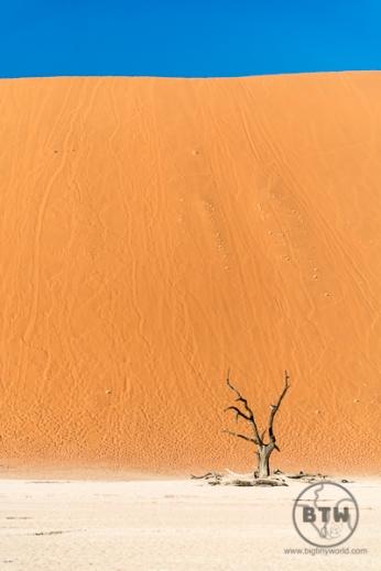 dead-tree-3