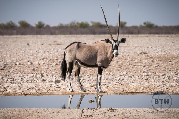 oryx-1