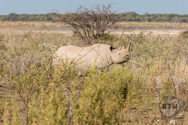 rhino-1