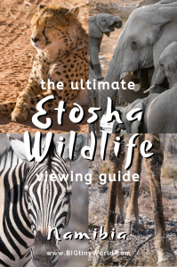 Ultimate Etosha National Park Wildlife Viewing Guide | BIG tiny World Travel | What do you most want to see on an African safari? Elephants? Lions? Rhinos? Click to read all the best places to find these animals and more in Etosha National Park in Namibia, along with where to stay, how much it costs, and any other questions you have about visiting! | #etoshanationalpark #africanwildlife #afriansafari #namibia