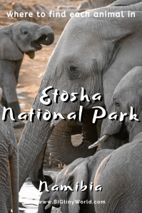 Where to Find Each Animal in Etosha National Park | BIG tiny World Travel | What do you most want to see on an African safari? Elephants? Lions? Rhinos? Click to read all the best places to find these animals and more in Etosha National Park in Namibia, along with where to stay, how much it costs, and any other questions you have about visiting! | #etoshanationalpark #africanwildlife #afriansafari #namibia