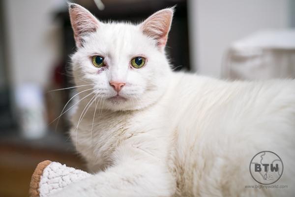kitty-3