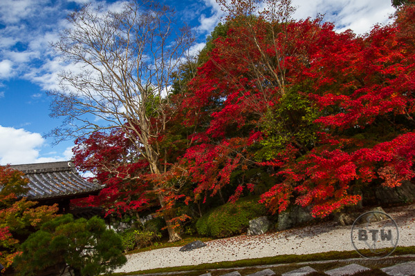Fall colors at a shrine in Japan | BIG tiny World Travel
