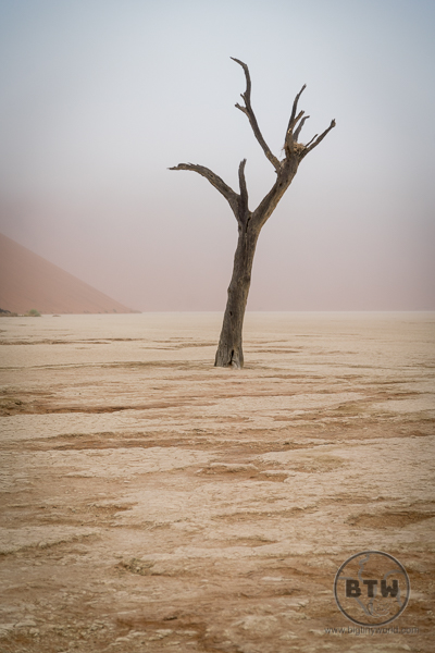 Dead tree in a foggy Deadvlei | BIG tiny World Travel