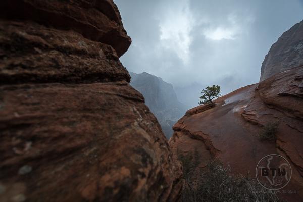 Rain in Zion National Park   BIG tiny World Travel